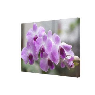 Las orquídeas de Cattleya envolvieron la lona Lona Envuelta Para Galerias