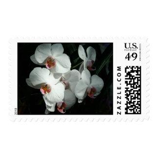 Las orquídeas en Meijer cultivan un huerto Timbres Postales