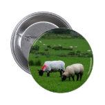 Las ovejas acercan a Deerpark Irlanda Pin