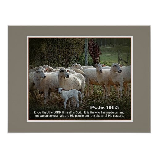 Las ovejas de su PasturewScripture Poster