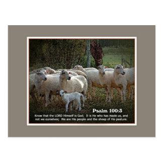 Las ovejas de su PasturewScripture Postal