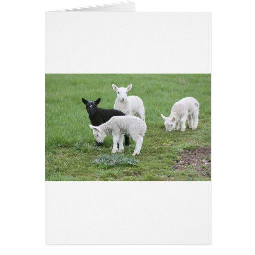 Las ovejas negras felicitación