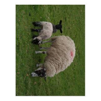 Las ovejas negras postales