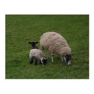 Las ovejas negras tarjetas postales