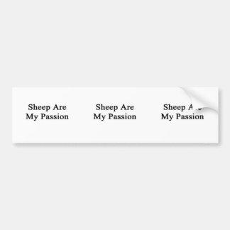 Las ovejas son mi pasión etiqueta de parachoque