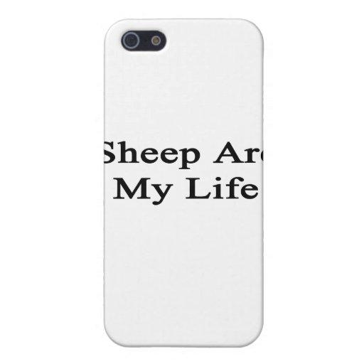 Las ovejas son mi vida iPhone 5 coberturas