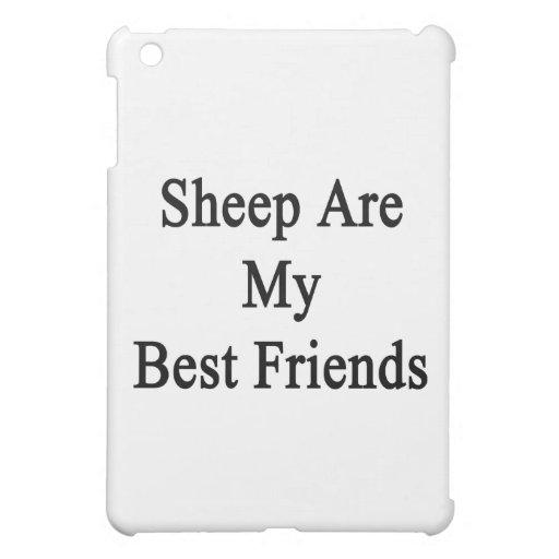 Las ovejas son mis mejores amigos