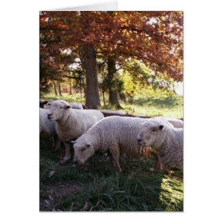 Las ovejas tarjeton