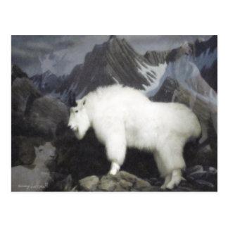 Las ovejas y las cabras postal