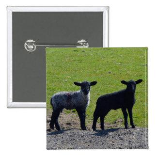 Las ovejas y los corderos Bodmin amarran Chapa Cuadrada 5 Cm