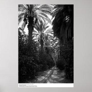 Las palmas y los árboles anaranjados acercan a Des Poster