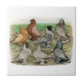 Las palomas clásicas del volante ataron teja cerámica