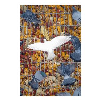 Las palomas consiguen el maíz fotografia