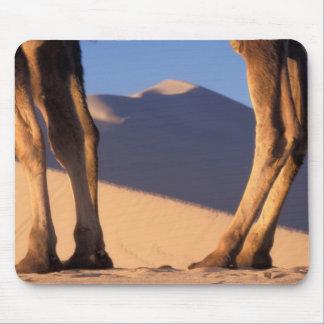 Las piernas del camello con las dunas de arena, Du Mouse Pad