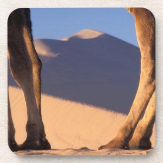 Las piernas del camello con las dunas de arena, Du Posavasos