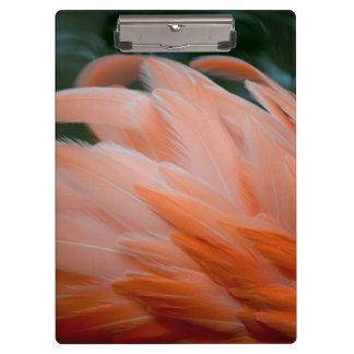las plumas del flamenco rizaron el pájaro del prim