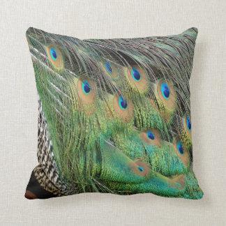 Las plumas del pavo real broncean colores verdes y cojín