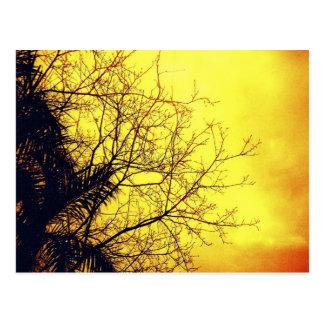 Las postales amarillas del cielo y del árbol