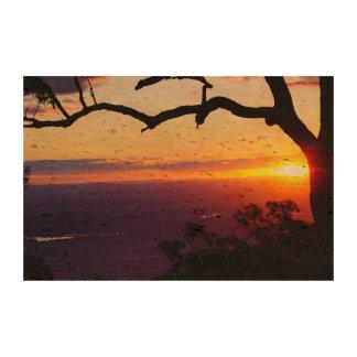 las ramas de árbol de las nubes del cielo del sol papel de corcho para fotos