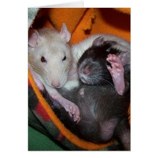 Las ratas son buenas para las almohadas felicitacion