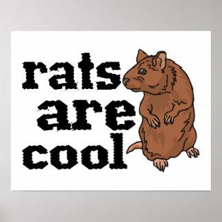 Las ratas son frescas póster