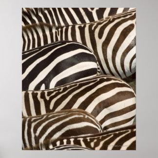 Las rayas de las cebras (quagga del Equus), Masai Póster