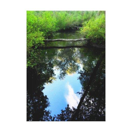 Las reflexiones de la cala envolvieron la lona lona estirada galerías