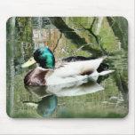 Las reflexiones Mousepad- de Drake del pato silves Tapete De Raton
