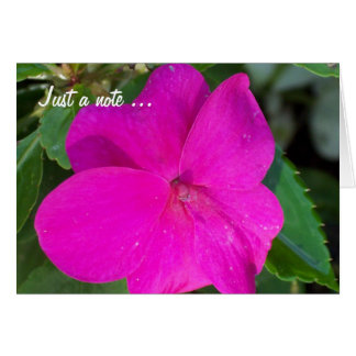 Las rosas fuertes florecen, apenas una tarjeta de