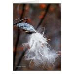 Las semillas de seda vuelan tarjeta