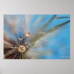 Las semillas y el agua del diente de león del © P  Impresiones