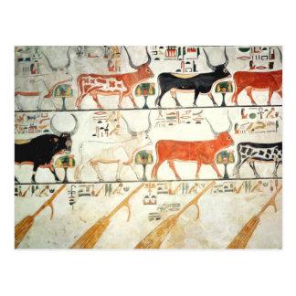 Las siete vacas celestiales y el toro sagrado tarjetas postales
