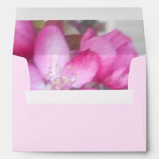 Las sombras del sobre de la flor preciosa del rosa