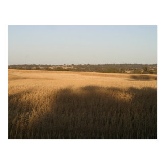 Las sombras en Wheatfield cosecharon las franjas e Postales