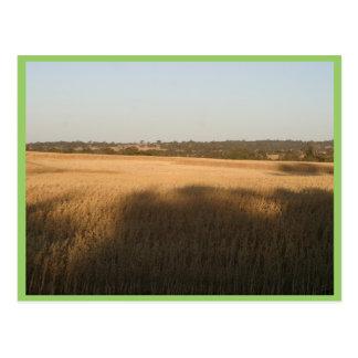 Las sombras en Wheatfield cosecharon las franjas e Postal