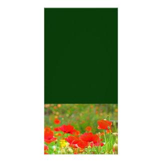 Las tarjetas de encargo de la foto añaden sus flor tarjetas fotográficas personalizadas