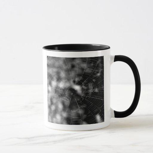 Las telas de araña hacen formas que obligan taza