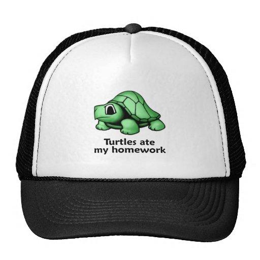 Las tortugas comieron mi preparación gorras