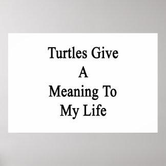 Las tortugas dan un significado a mi vida impresiones