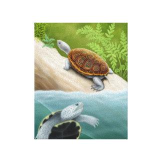 Las tortugas de la tortuga acuática de Diamondback Impresión En Lona
