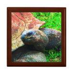 Las tortugas gigantes en el parque zoológico de Ka Cajas De Joyas