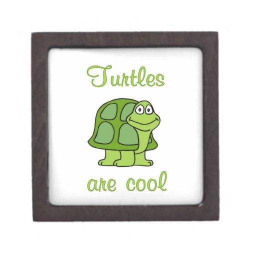 Las tortugas son frescas cajas de regalo de calidad