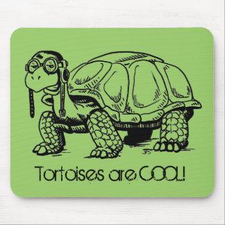 ¡Las tortugas son FRESCAS! Mousepad
