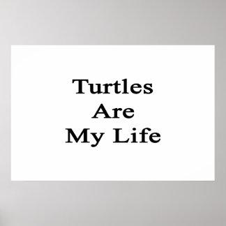 Las tortugas son mi vida impresiones