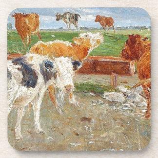 Las vacas acercan a bien en Gammelgaard, Saltholm Posavaso