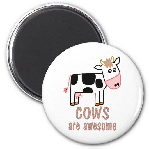 Las vacas son impresionantes iman de nevera