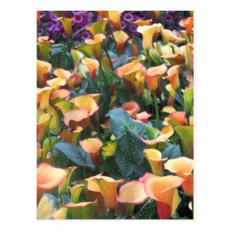 Las Vegas Butterfly Garden Flower Ladybug UNIQUE G Postcard