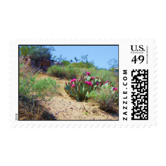 las vegas cactus in spring postage