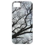 Las venas del árbol - caso del iPhone 5 iPhone 5 Funda
