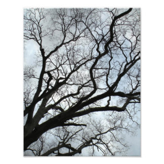 Las venas del árbol cojinete